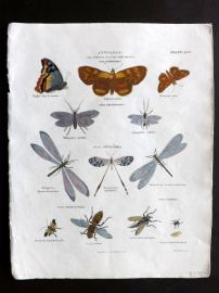 Rees Cyclopedia 1816 HCol Print. Annulosa. Moths, Wasps, Insects
